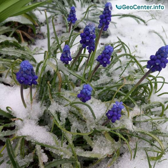 Апрельские снегопады в Украине. Снег в Днепре и Харькове.