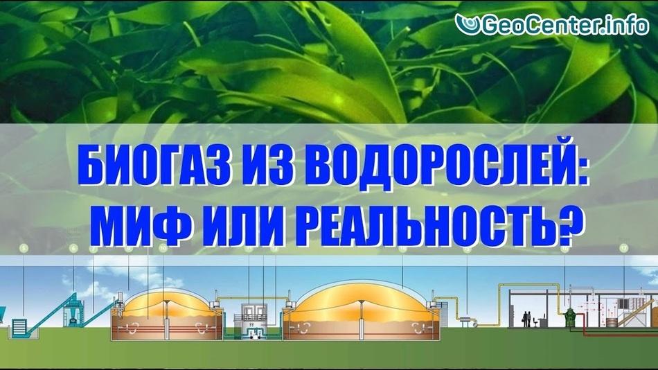 Биогаз из водорослей: миф или реальность?
