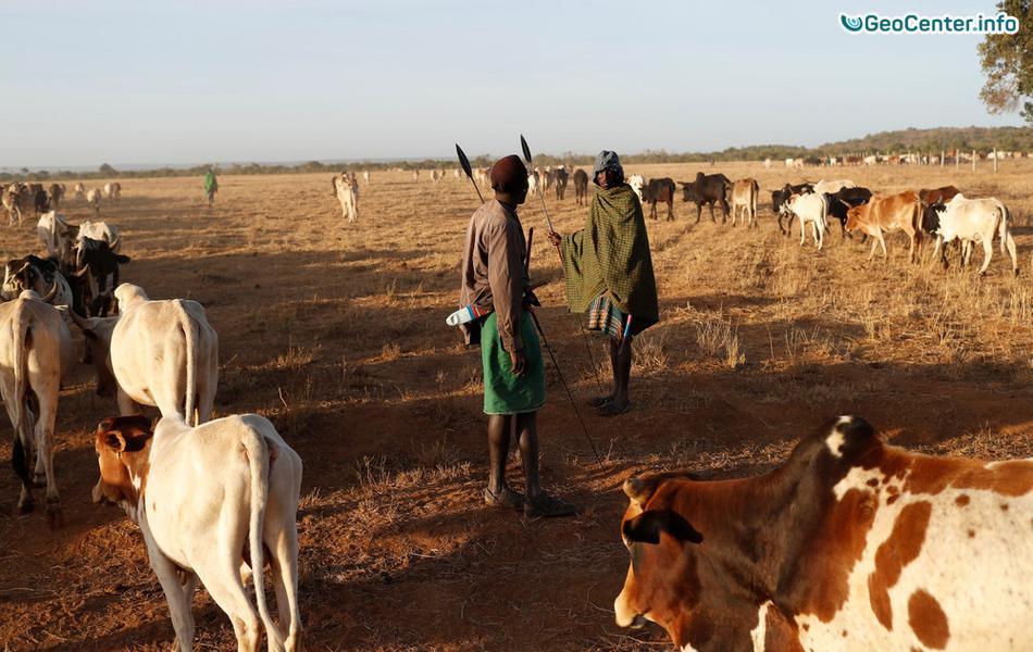 Неравнодушный кениец спасает жизни беззащитным животным во время засухи