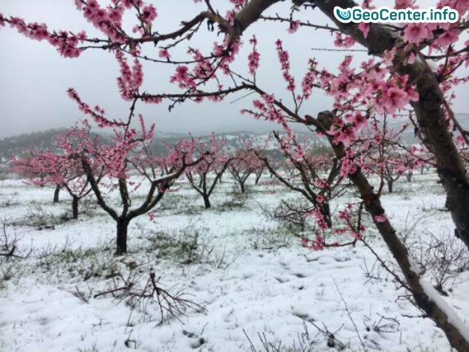 Снегопад обрушился на Испанию