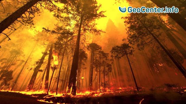Сильные лесные пожары в Аргентине