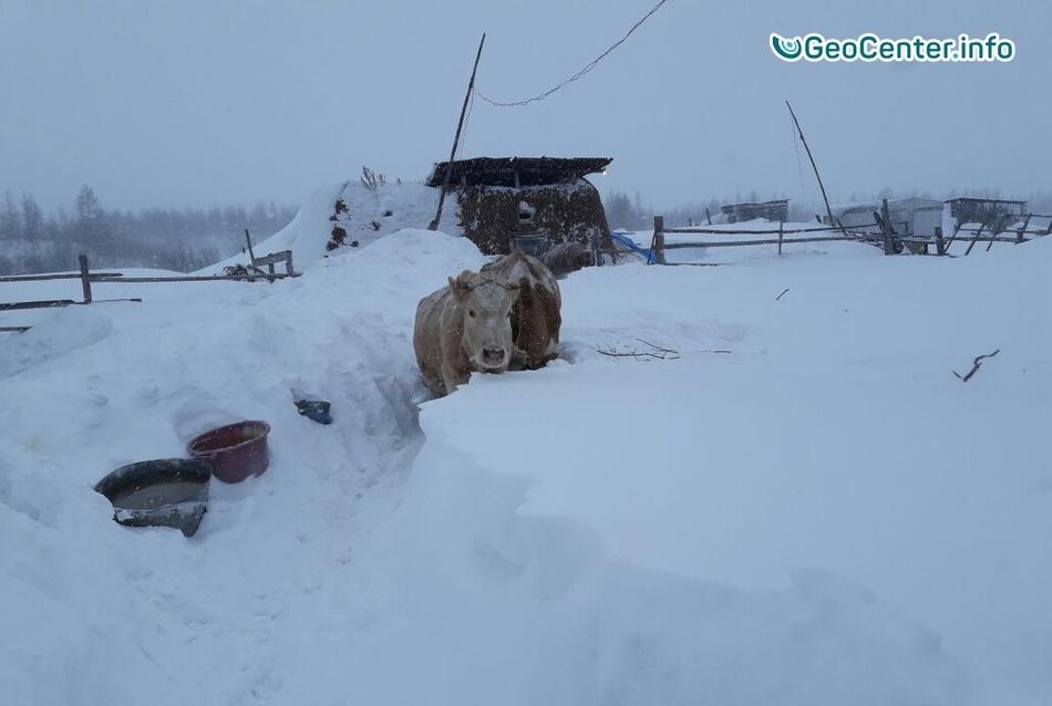 Двухметровые сугробы в Якутии