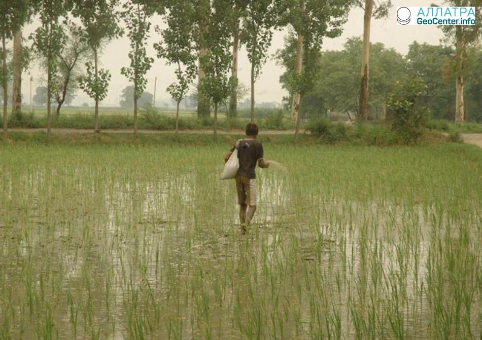Град и несезонный дождь уничтожил урожай в Индии, март 2018 г.