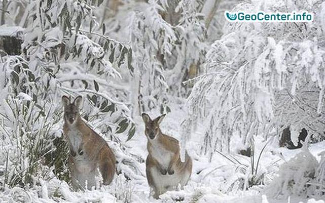В Австралии в разгар лета выпал снег