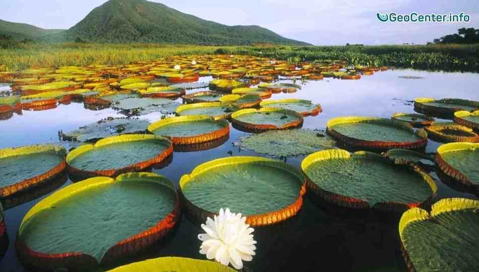 Самое большое болото в мире - Пантанал| БРАЗИЛИЯ. Аномальная погода.  Выпуск 94