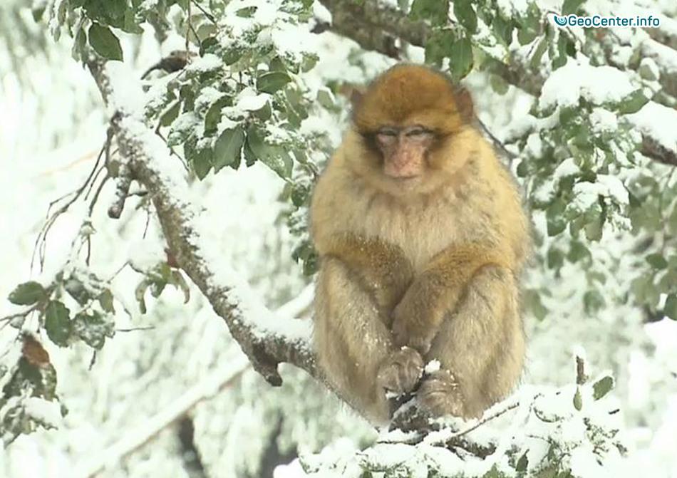 В Марокко пришла зима, 14 декабря 2017 года