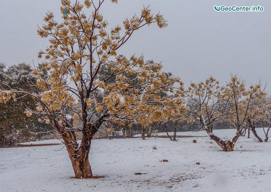 В Сахаре второй раз за год выпал снег, февраль 2018 г.
