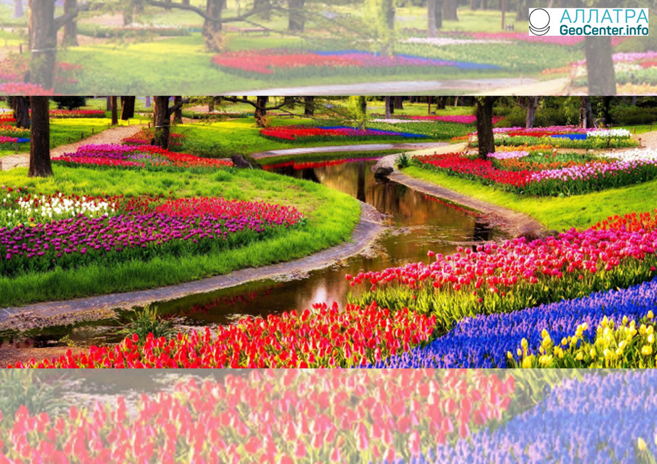 Разноцветное великолепие тюльпанов в голландском парке Кекенхоф, март 2018 г.