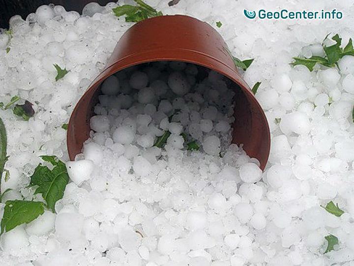 20 минут ледяного дождя нанесли серьезный ущерб виноградникам на юго-востоке Грузии