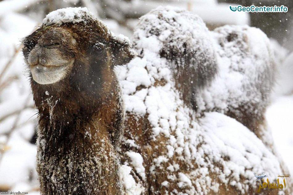 Снежный циклон в Алжире, Тунисе и в Испании