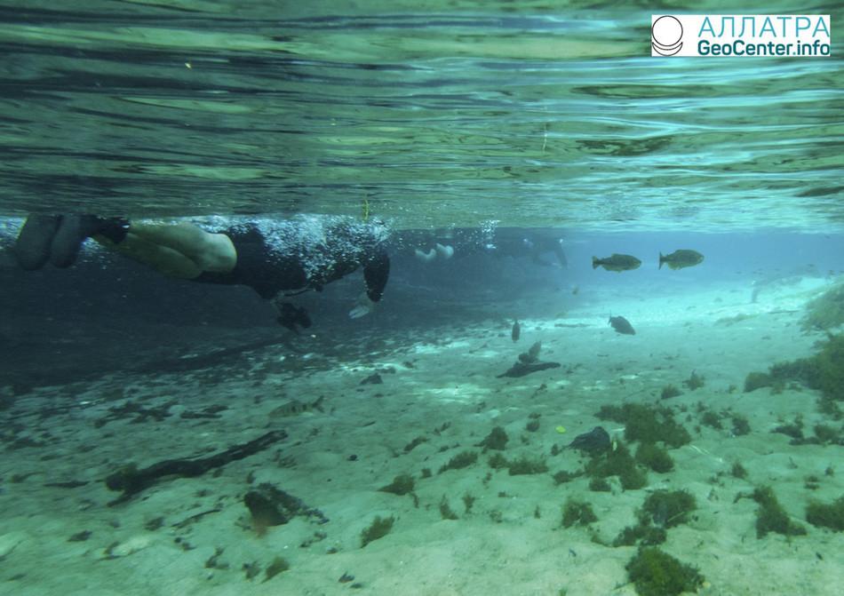 Подводная прогулка по затопленному заповеднику, Бразилия, март 2018