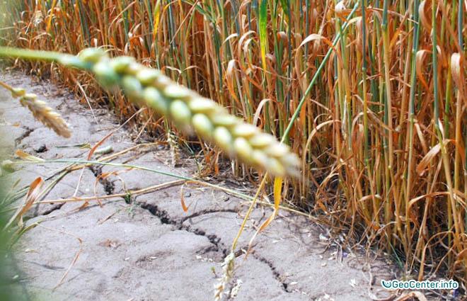 Засуха в Забайкальском крае