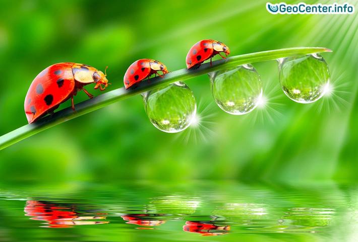 ЧТО БУДЕТ, ЕСЛИ НАСЕКОМЫЕ ВДРУГ ИСЧЕЗНУТ? Удивительные насекомые.