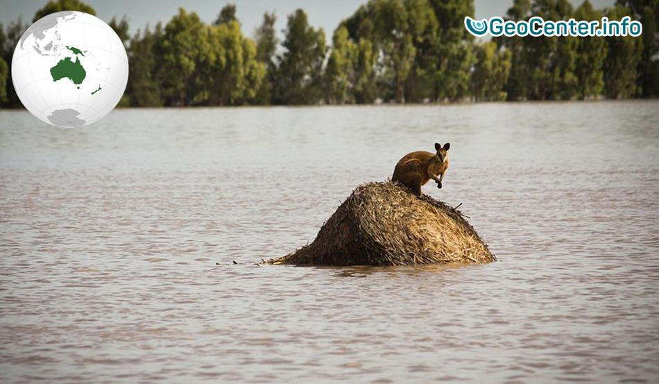 Ливневые дожди вызвали наводнение в Австралии