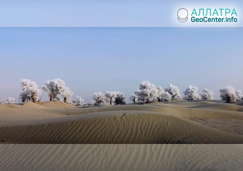 Osuheľ na stromoch v púšti Taklamakan, január 2019