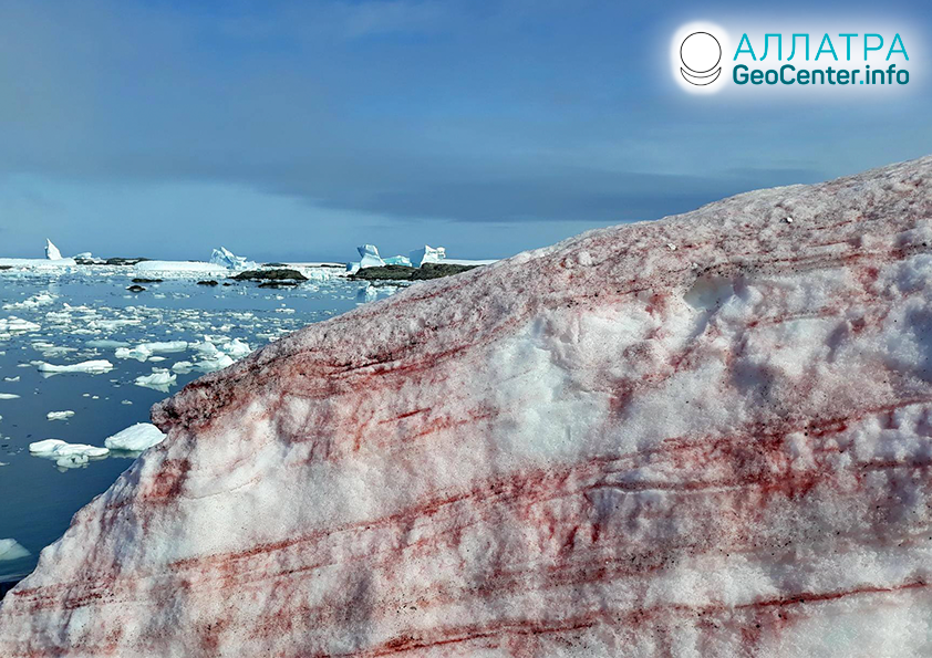 Красный снег в Антарктиде, февраль 2020