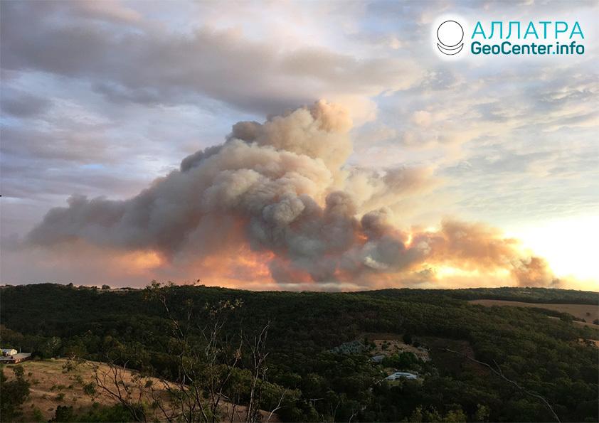 Лесные пожары, январь 2021
