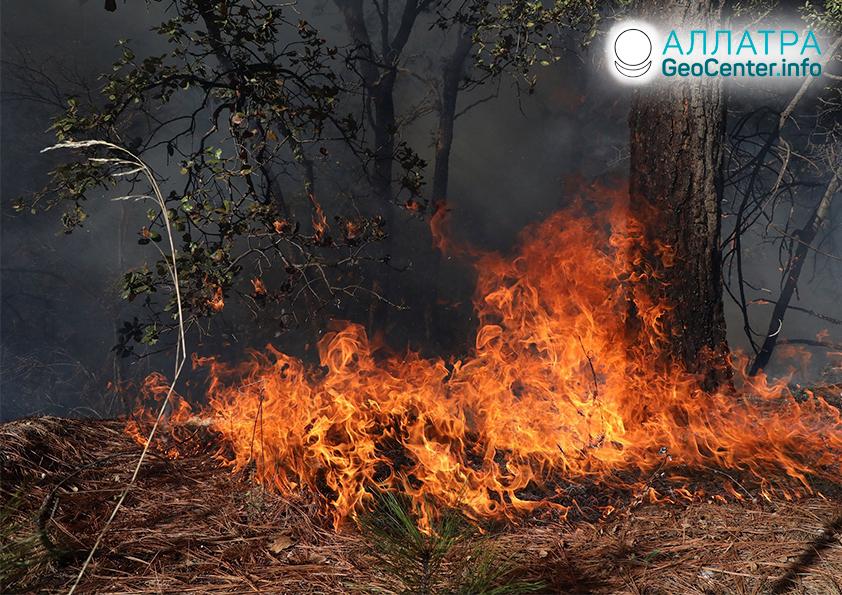 Лесные пожары, март 2021