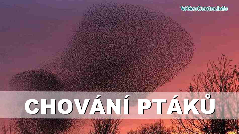 Neobvyklé chování ptáků. Anomální počasí. Klimatické změny. 97 vydání