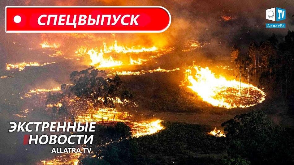 Пожары в Австралии уничтожают всё на своём пути. Как мы можем помочь? Репортаж от местного жителя