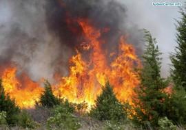 Лесные пожары на Ямале, Западная Сибирь