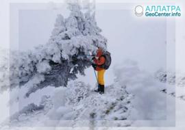 """Алжир """"утопает"""" в снегу, январь 2019"""