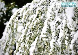 Весенние снегопады, конец апреля 2021