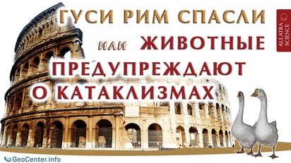 Гуси Рим спасли, или Животные предупреждают о катаклизмах