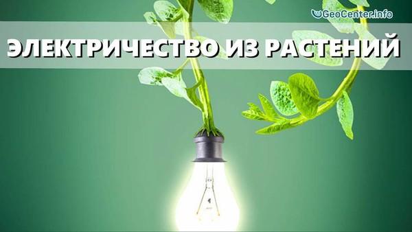 Электричество из комнатных растений - миф или реальность? Дыхание жизни