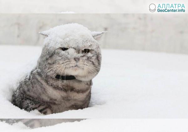 Снежный шторм обрушился на Кировскую область, апрель 2018 г.
