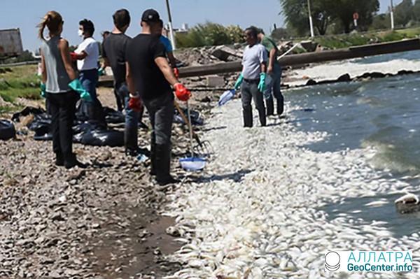 Массовая гибель рыбы в Санта-Роза, Аргентина, февраль 2018 г.