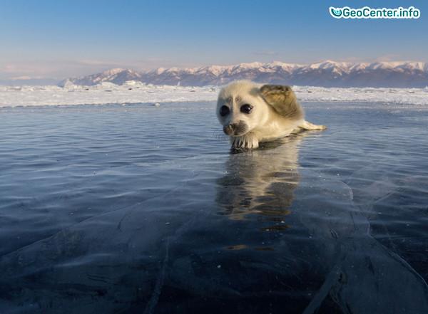 Землетрясение в акватории Байкала