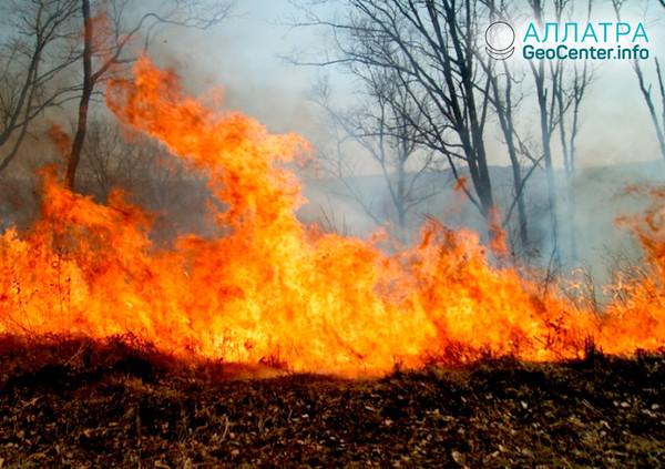 Лесные пожары в Приморье, апрель 2018
