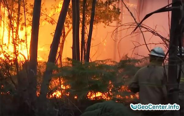 Лесные  пожары в Португалии, август 2017 года