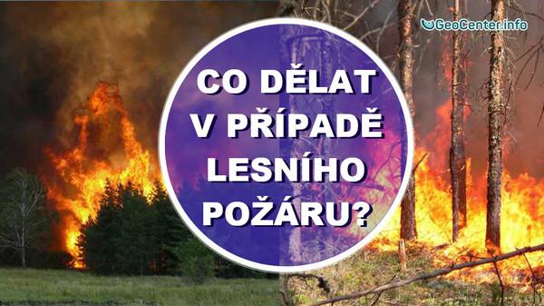 Co dělat v případě lesního požáru? Instrukce pro mimořádné situace