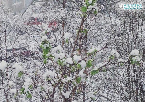 Майский снегопад в Мурманске (Россия), 2018 г.