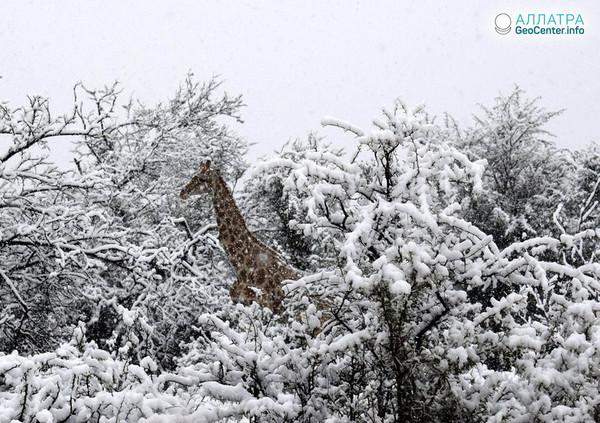 Снегопады в России и ЮАР, сентябрь 2018 г.