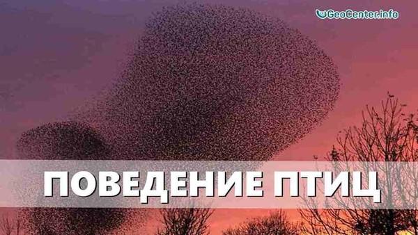 Необычное поведение птиц. Аномальная погода. Климатические изменения Выпуск 97