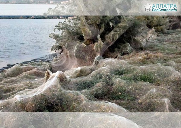 Сотни метров побережья Греции покрылись паутиной, сентябрь 2018 года