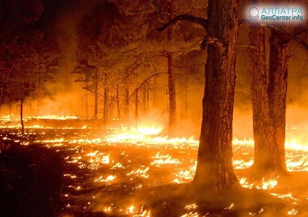 Лесной пожар в Оренбургской области, Россия, октябрь 2018 года