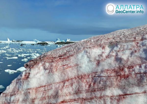 Červený sneh v Antarktíde, február 2020