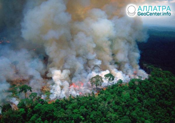 Лесные пожары в лесах Амазонки, август 2019