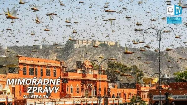 Invaze sarančat! Záplavy → Indie, Střední Amerika. Krupobití → USA. Silná bouře → Rusko